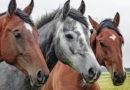 Horses Provide Healing for Veterans Suffering from PTSD