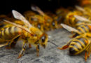 Young Man With Dyslexia Finds Passion In Beekeeping