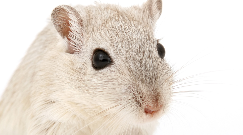 New Diabetes Drug Reverses Memory Loss In Alzheimer's Mice