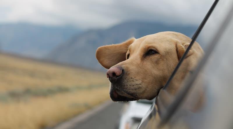 Hasil gambar untuk A Canine Companion