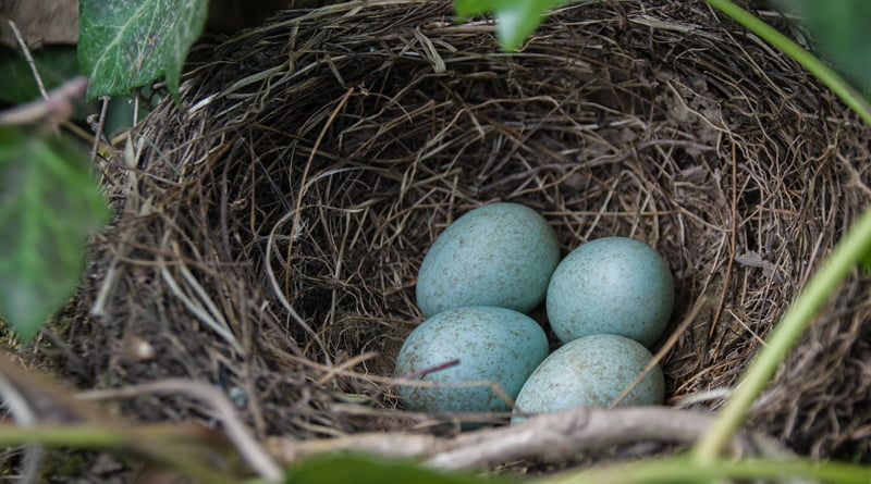 The Never Quite Empty Nest